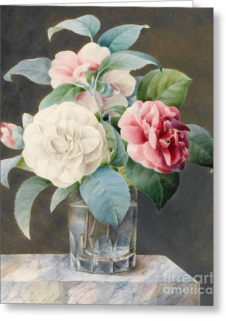 A Cut Glass Vase Containing Camelias Greeting Card by Sarah Bray