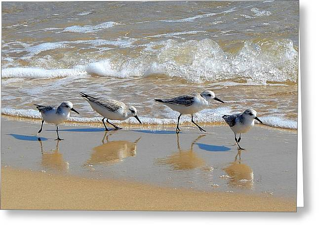A Cute Quartet Of Sandpipers Greeting Card