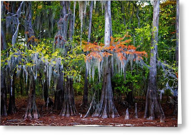 Greeting Card featuring the digital art A Cypress Fall by Lana Trussell