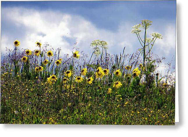 Greeting Card featuring the photograph A Daisy Day by Karen Shackles