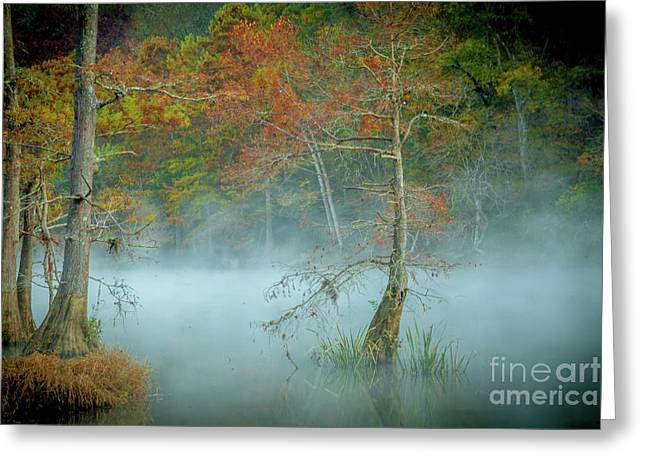 Greeting Card featuring the photograph A Dancing Cypress by Iris Greenwell