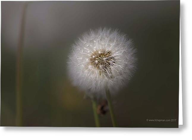 Greeting Card featuring the photograph A Dandelion by Lora Lee Chapman