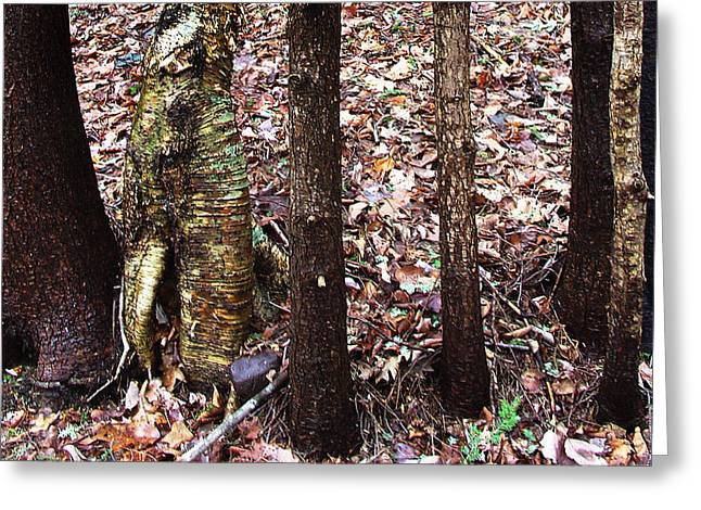 A Dapper Birth In The Midst Of Hemlocks Greeting Card by Terrance DePietro