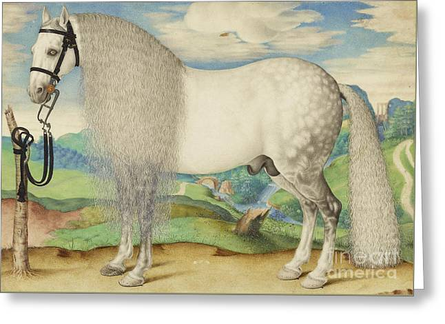 A Dappled Gray Stallion Tethered In A Landscape Greeting Card by Celestial Images