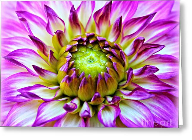 A Dashing Dahlia Greeting Card by Clare Bevan