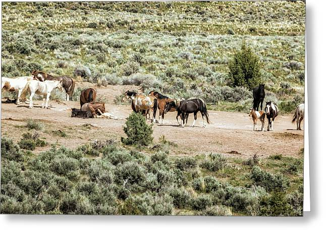 A Day In The Lives Of South Steens Wild Horses, No. 2 Greeting Card by Belinda Greb