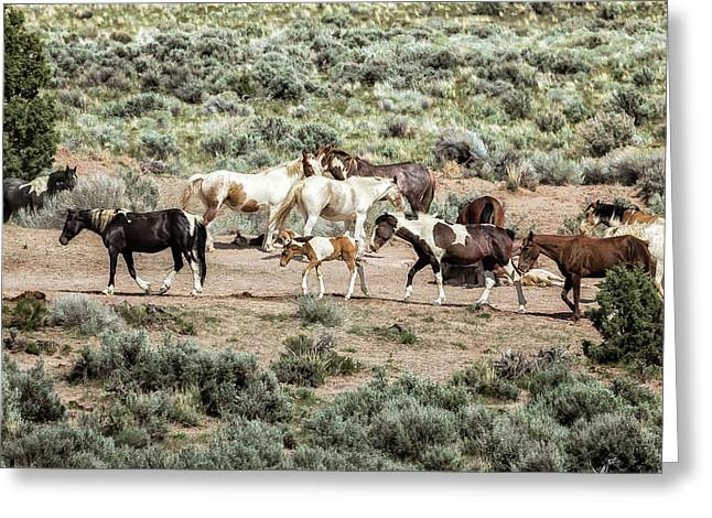 A Day In The Lives Of South Steens Wild Horses, No. 3 Greeting Card by Belinda Greb