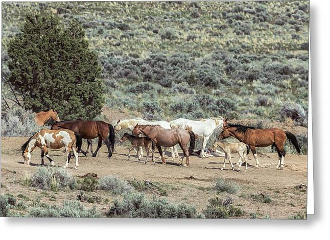 A Day In The Lives Of South Steens Wild Horses, No. 4 Greeting Card by Belinda Greb