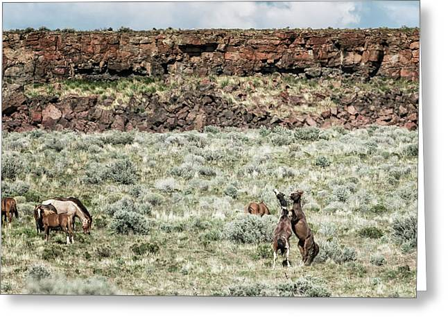 A Day In The Lives Of South Steens Wild Horses, No. 8 Greeting Card by Belinda Greb