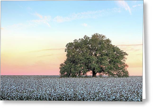 A Deeply Southern Sunrise Greeting Card by JC Findley