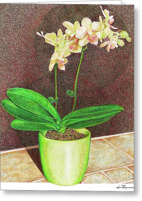 A Delicate Phal Greeting Card