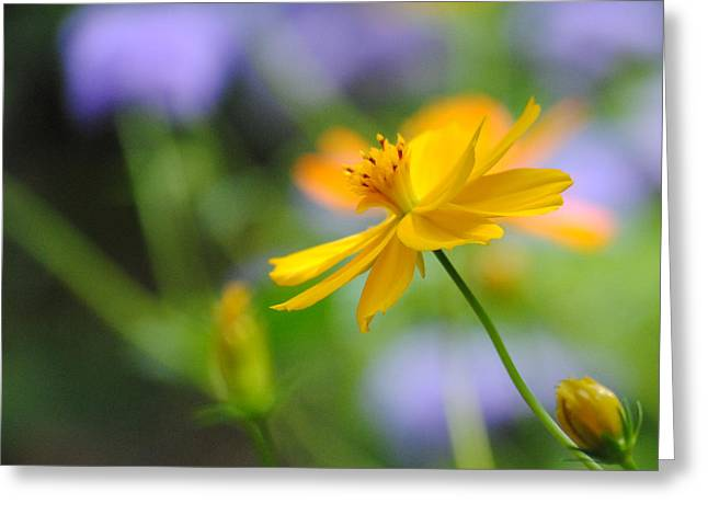 A Delicate Touch Of Orange Greeting Card by William Martin