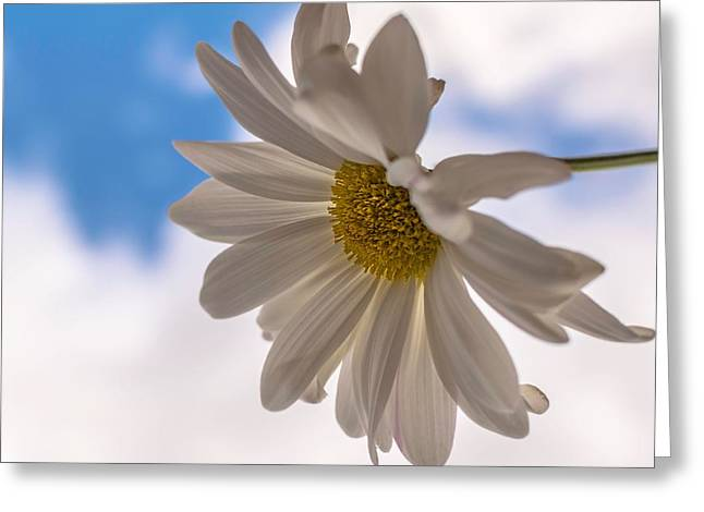 A Different Daisy Greeting Card