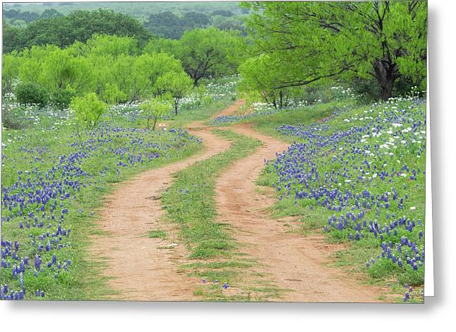 A Dirt Road Lined By Blue Bonnets Of Texas Greeting Card