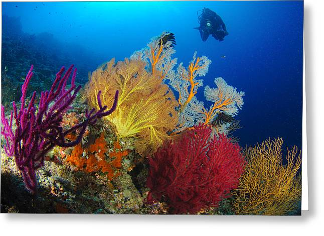 Scuba Greeting Cards - A Diver Looks On At A Colorful Reef Greeting Card by Steve Jones