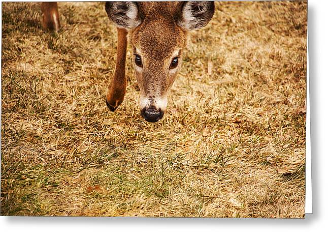 A Doe Encounter Greeting Card by Karol Livote