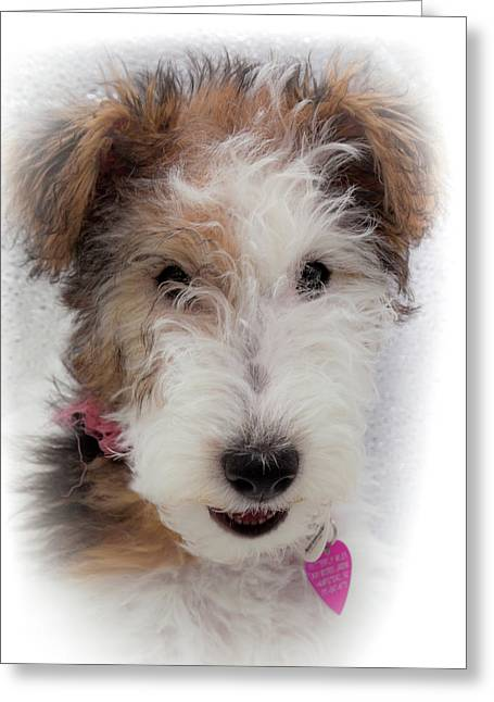 A Dog Named Butterfly Greeting Card by Karen Wiles
