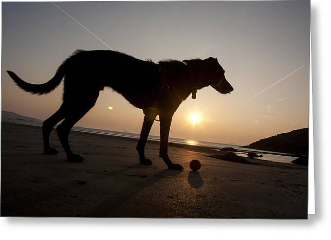 A Dog With His Ball At Sunset Greeting Card