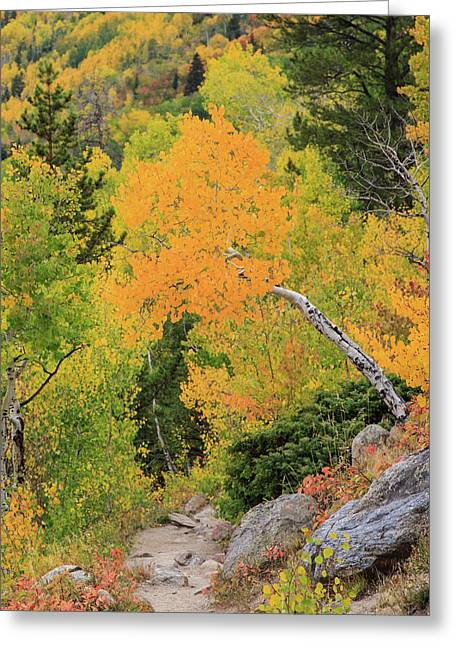 Greeting Card featuring the photograph Yellow Drop by David Chandler