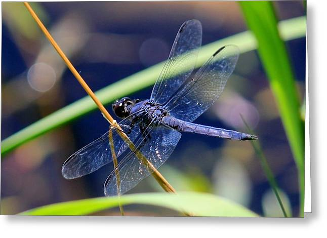 A Dragonfly  Greeting Card by James Lafnear