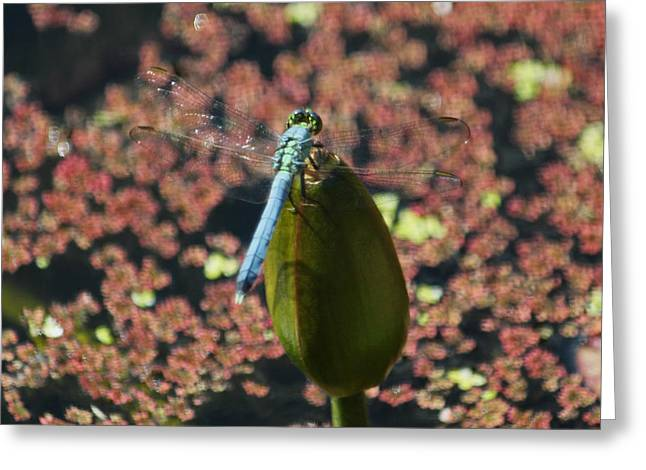 A Dragonfly Kind Of Day Greeting Card by Suzanne Gaff