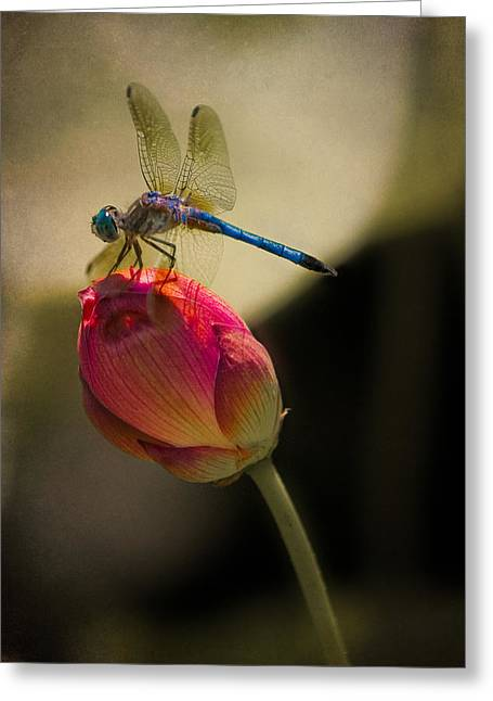 A Dragonfly Rests Momentarily On A Lotus Bud Greeting Card