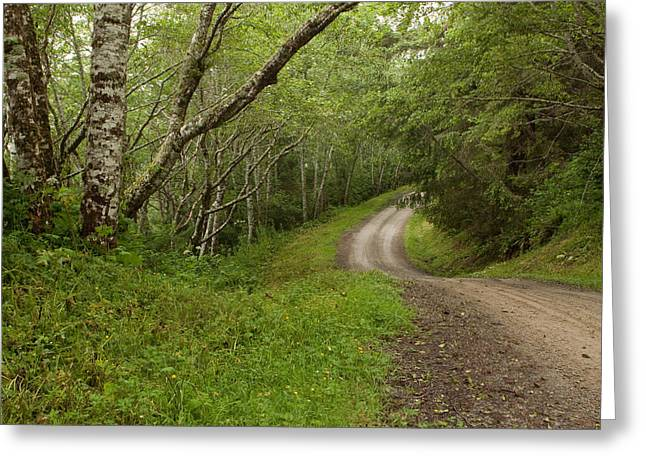 A Drive Thru The Woods Greeting Card by Denise Dethlefsen