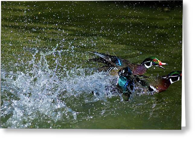 Greeting Card featuring the photograph A Duck Race by Thanh Thuy Nguyen