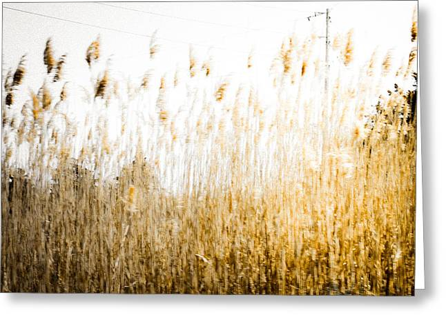 A Faded Memory Greeting Card by Colleen Kammerer