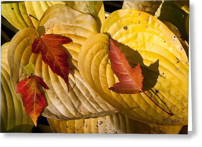 A Fall Contrast Greeting Card