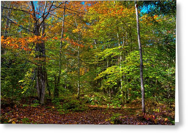A Fall Day On The Trail Greeting Card