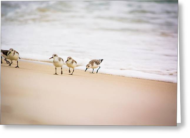 A Family Of Sandpipers Greeting Card by Shelby Young