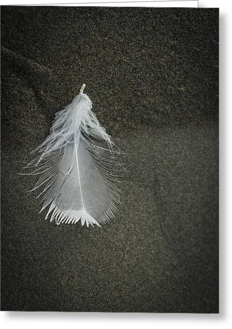 A Feather At The Edge Of The Water Greeting Card