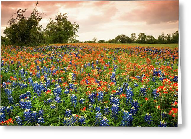 A Field Of Bluebonnet And Indian Paintbrush - Wildflower Field In Texas Greeting Card by Ellie Teramoto
