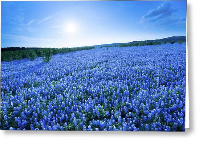 A Field Of Eternal Blue - Bluebonnet - Texas Greeting Card
