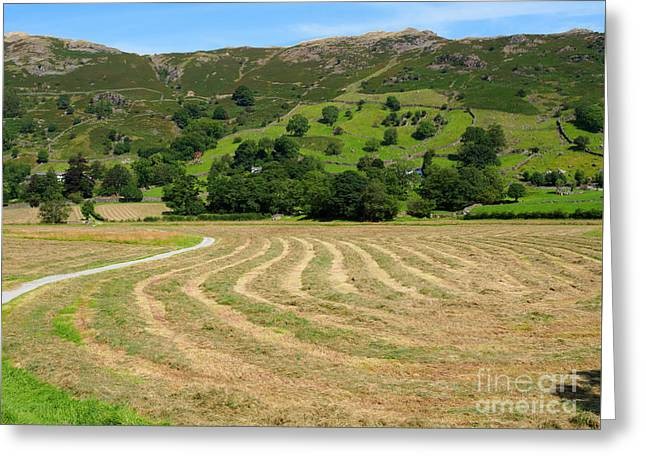 A Field Of Freshly Mown Hay Drying In Great Langdale Greeting Card by Louise Heusinkveld