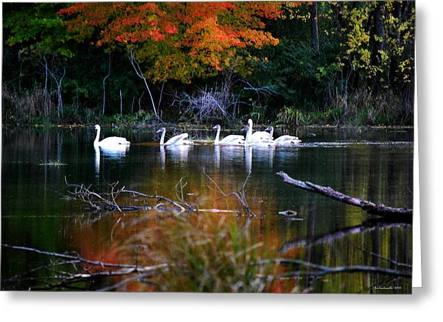 A Fine Autumn Day II Greeting Card by Michelle  BarlondSmith