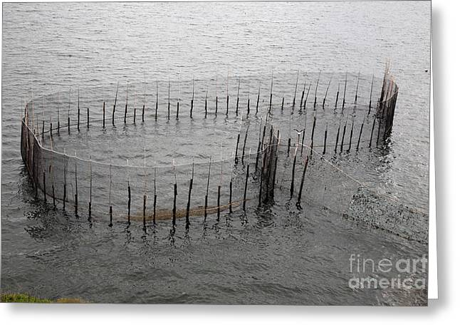 A Fish Weir Greeting Card by Ted Kinsman