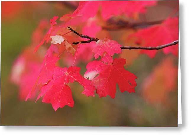 A Flash Of Autumn Greeting Card