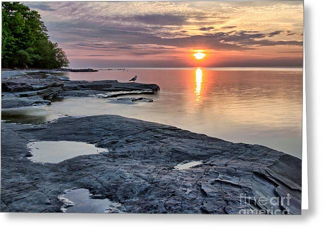 A Flat Rock Sunset With Seagull Greeting Card