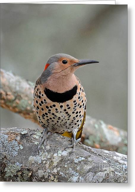 A Flicker Of Sunshine In Winter Greeting Card
