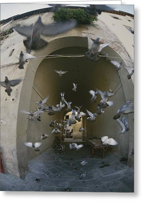 A Flock Of Pigeons Fly Out Of An Arched Greeting Card by Raul Touzon