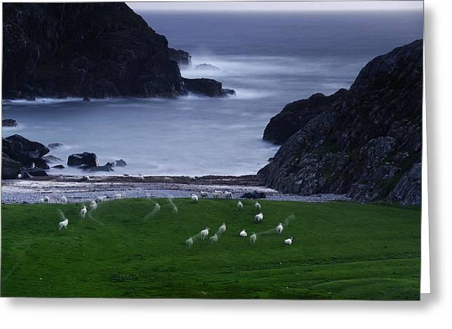 A Flock Of Sheep Graze On Seaweed Greeting Card by Jim Richardson