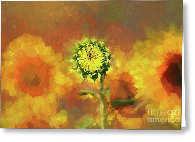 A Flower Waiting To Bloom Greeting Card by Darren Fisher