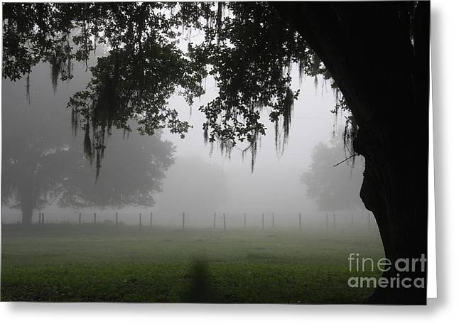 A Foggy Day In Rural Fl Greeting Card