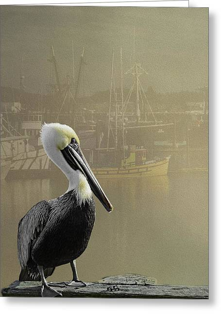 A Foggy Pelican Sunset Greeting Card