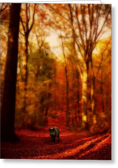 A Forest Greeting Card by Studio Yuki