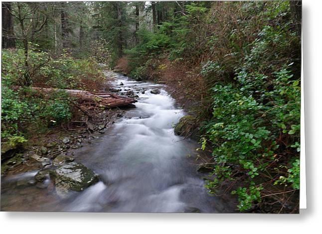 A Forest Stream Greeting Card by Jeff Swan