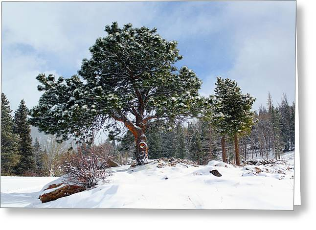 Greeting Card featuring the photograph A Fresh Blanket Of Snow by Shane Bechler