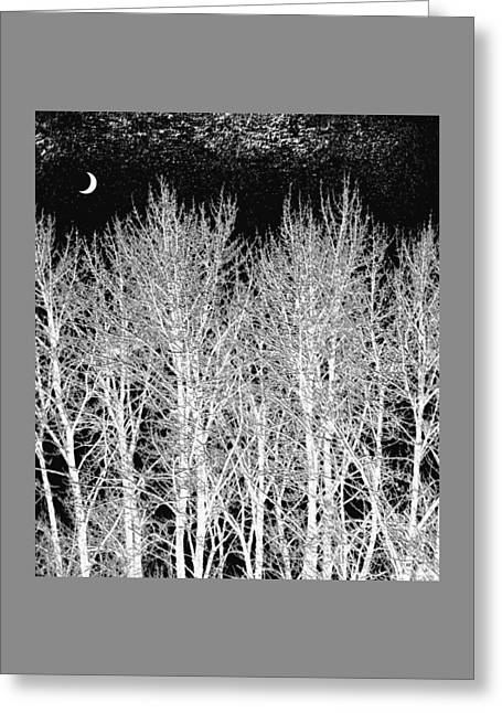 A Frosty Winter Night Greeting Card